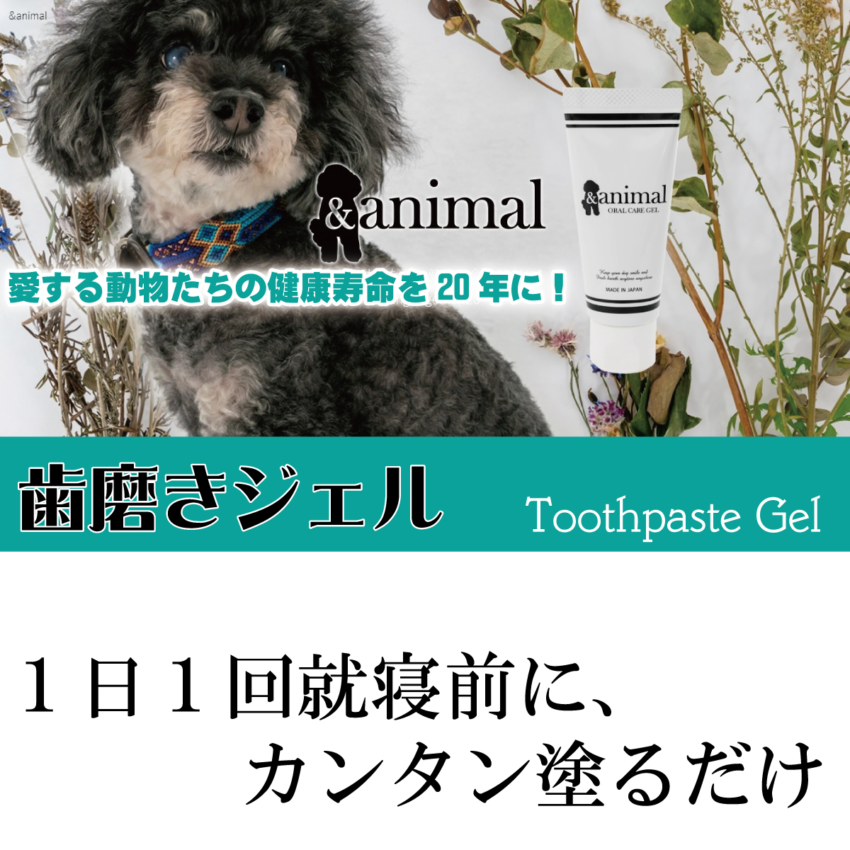 and anmal 歯磨きジェル Toothpaste Gel 愛する動物たちの健康寿命を20年に!