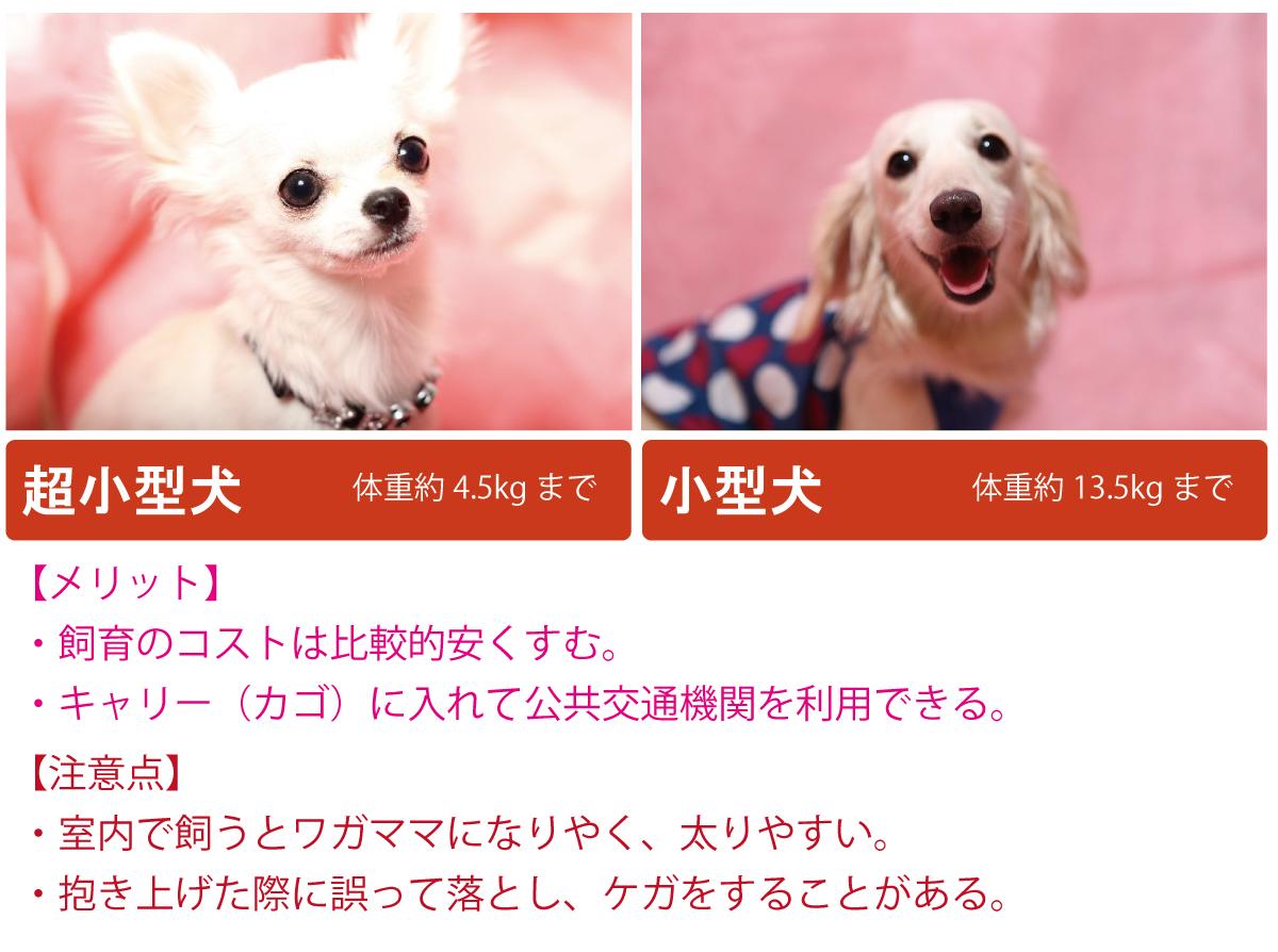 小型犬について