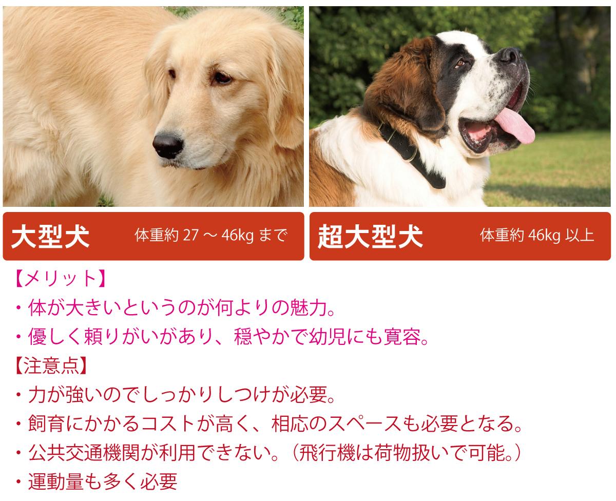 大型犬について