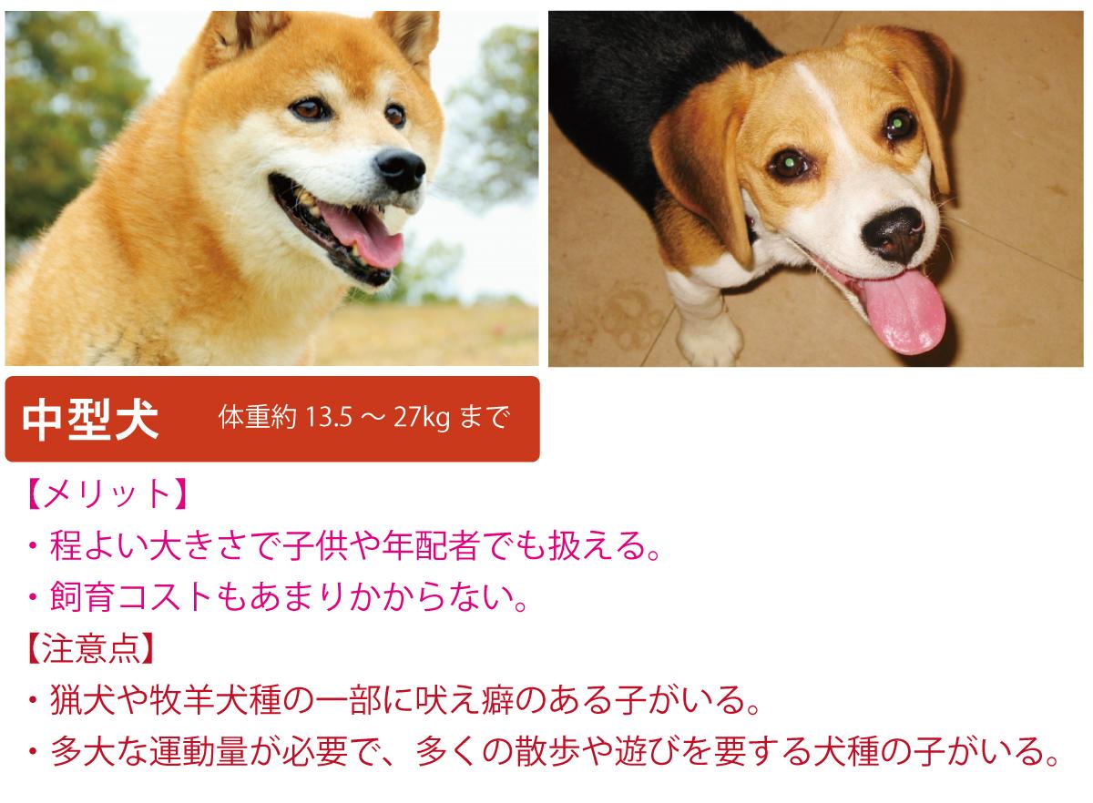 中型犬について